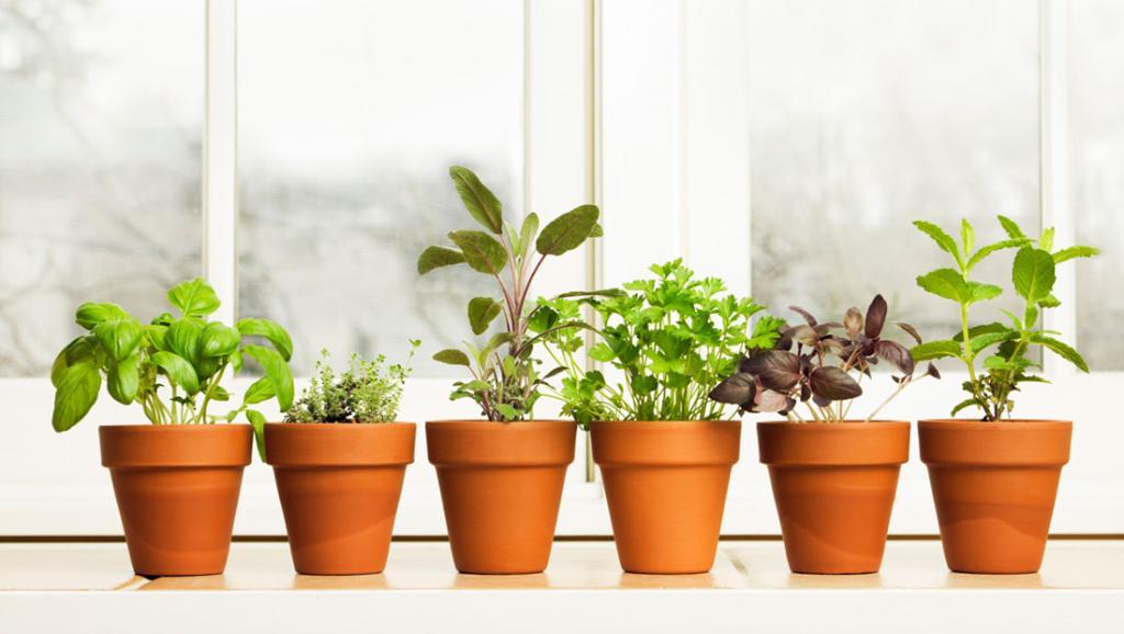 10 herbs you can grow inside all year long: https://t.co/v1s3E0V9ku https://t.co/MgggWm8aeB