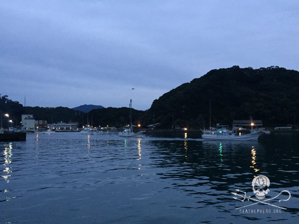 RT @CoveGuardians: 0620am: 11 boats leave to hunt the innocent.#tweet4taiji https://t.co/hyEeWcxSbi