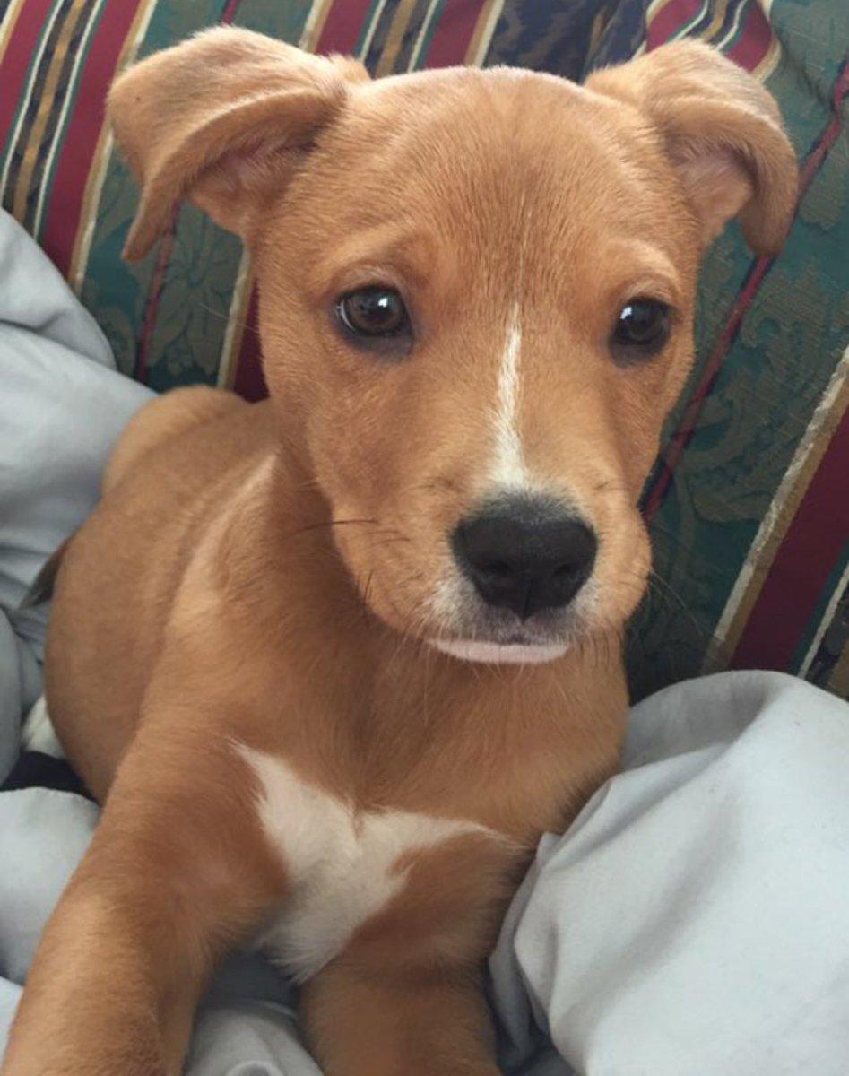 RT @PitbuIIs: half pitbull half golden retriever https://t.co/5Q8blK2MHR