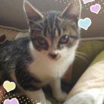 @tabasajjkelly: #拡散希望 #猫 #里親募集 #福岡 福岡、佐賀にお住まいでこの子を終生愛してくださる里親様を募集します生後80日くらい。ワクチン済みエイズ白血病陰性(現時点)保健所引出人慣れしたかわいい男の子です。 https://t.co/3jVNxtZEjp
