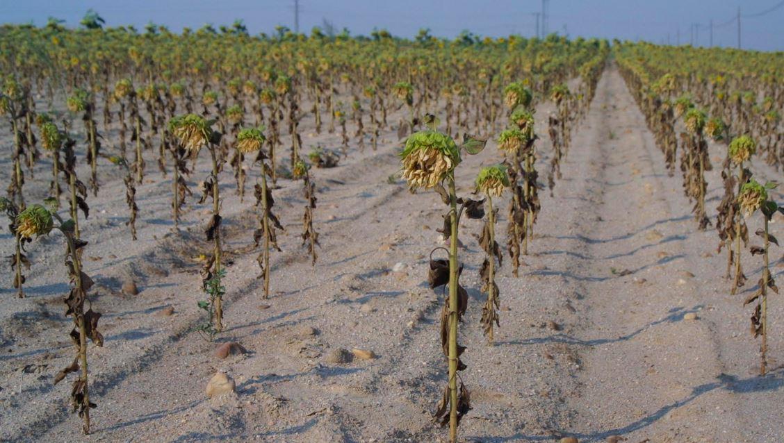 El cambio climático amenaza la seguridad alimentaria según @WWFespana https://t.co/JJ36uuebg2 #NiUnGradoMás https://t.co/UQrDekDaEn