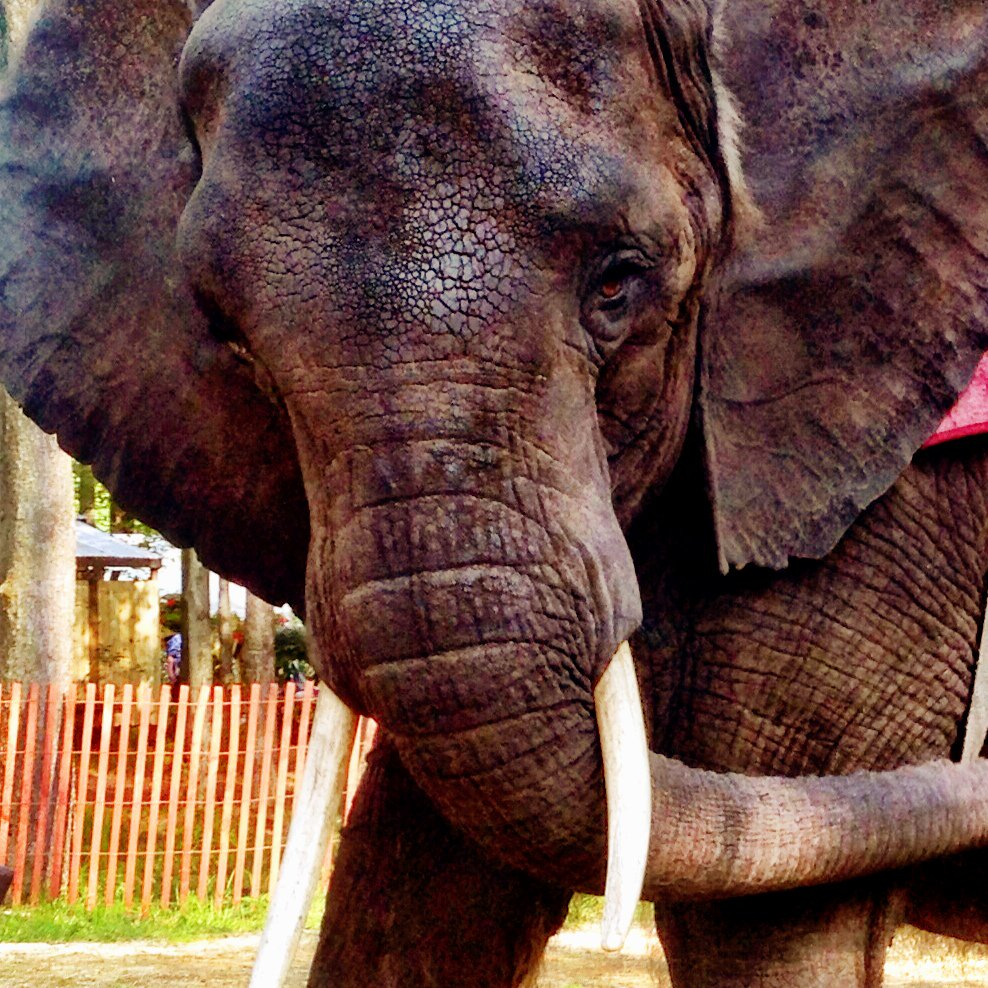 """Today I wrote USDA with concerns over their """"hands off"""" vet policy. Animal welfare needs more priority! #Nosey https://t.co/2zS9nekCpn"""