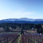 Check out that snow line on Mt. Benson today! Winter is coming! Via Chateau Wolff Estate #Nanaimo #ExploreNanaimo https://t.co/DVIXLxJW1Q