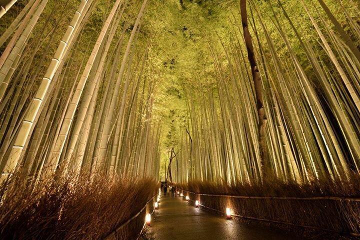【竹林の小径ライトアップ】 少しずつ開催日が近づいてきた京都・嵐山花灯路-2015。 恒例の人気スポット、竹林の小径は今年ももちろん美しすぎるライトアップ!  12月11日(金)〜20日(日)に実施^o^ ぜひお越しください! https://t.co/9P4JT1wRYI