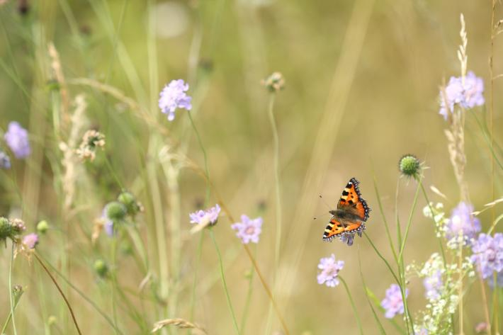 Use of neonicotinoid pesticides linked to butterfly declines in UK: https://t.co/VNy6nlVbmF https://t.co/4La1ohiKi7