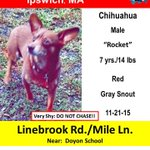 #stacoDOGBOLO Rocket was seen last night in Ipswich. Hes very timid. Pls call # if seen. Help Rocket fly home! https://t.co/ptuviVvlBF