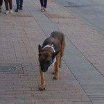 Por favor si alguien a visto a esta perrita perdida en Tunja,responde al nombre de Mila @hectorjoseve @endirectocon https://t.co/Bam0iPFMOW