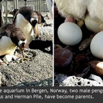 A very special penguin story. Read it here ► https://t.co/2a549iH4xm https://t.co/1lHPKCbjFZ