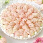 キル フェ ボンから「白イチゴ」をふんだんに使った贅沢な新作タルト - 銀座&大阪店で先行販売 https://t.co/IktPOQ4LhE https://t.co/77pX5yEAVk
