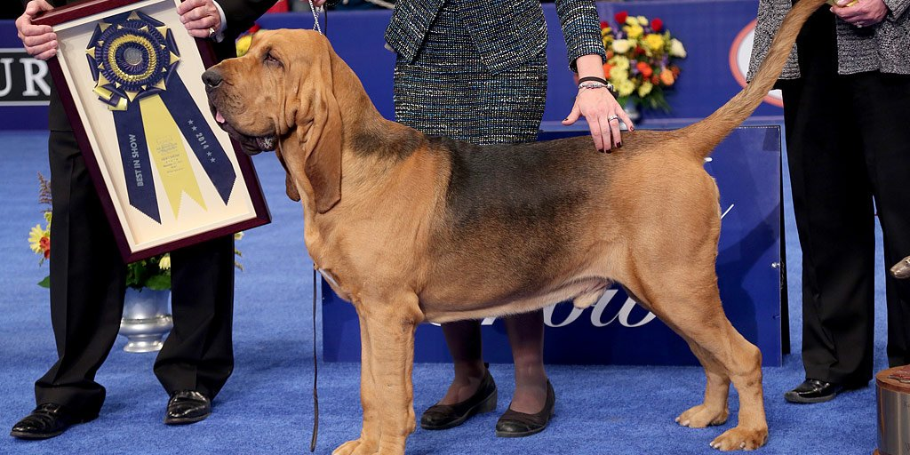 The breeds to watch at the 2015 National Dog Show on Thanksgiving day