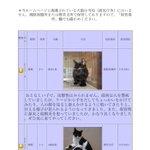 標茶&釧路保健所さん✳︎New✳︎ 新たに負傷猫さんが収容されました。また①の子達は全員期限切れです。牛柄猫は標茶支所です☺️#拡散希望 #里親募集 #北海道 #保健所 #標茶 #釧路 https://t.co/N3Tpld62xA https://t.co/yHDaYLavLM