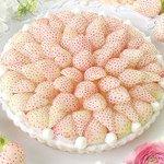キル フェ ボンから「白イチゴ」をふんだんに使った贅沢な冬限定タルト - 銀座&大阪店で先行販売 - https://t.co/IktPOQ4LhE https://t.co/T2nSC9mj0b