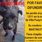 #BuenMiercoles Martincito tiene que regresar a su casa, por favor lo ayudamos con un RT? https://t.co/Fat64OSkgY