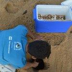 Nem deu tempo de chorar: a difícil missão de salvar filhotes de tartaruga de mar de lama https://t.co/DBiSh8AYor https://t.co/2M7QKiKrRV