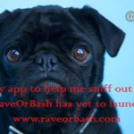 Introducing @raveorbash #Toronto #startup with #EndOfFakeReviews as its target for users of #reviews/reccos. SignUp https://t.co/YWBxGUpCln