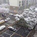 [Korea Today] First Snow หิมะแรกของปีนี้ มาแล้วจ้าาาาาา บันทึกไว้ว่าปี 2015 หิมะแรกมาวันที่ 26 พย. ^^ https://t.co/fgEV7V4qK4