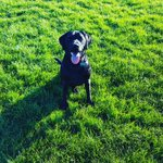 Oscars back and playing his favourite game. Fetch. #dogs #Newcastle https://t.co/JokNzgzDhq