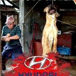 CAMPAIGN🔉 #BoycottCRUELTY #BoycottKOREA ➡NATION OF .@Hyundai https://t.co/fLQhsFznCT 🚫STOP CRUEL #DogMeatTrade https://t.co/rL5EF3aTmZ