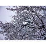 #ufa #winter Зимнего настроения всем ^^.#ufa #winter https://t.co/wKpHi4MdDA