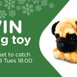 RT and Follow for the chance to win this cute pug toy. Ends 23:00 27/11 #FreebieFriday https://t.co/nv266jK3kL