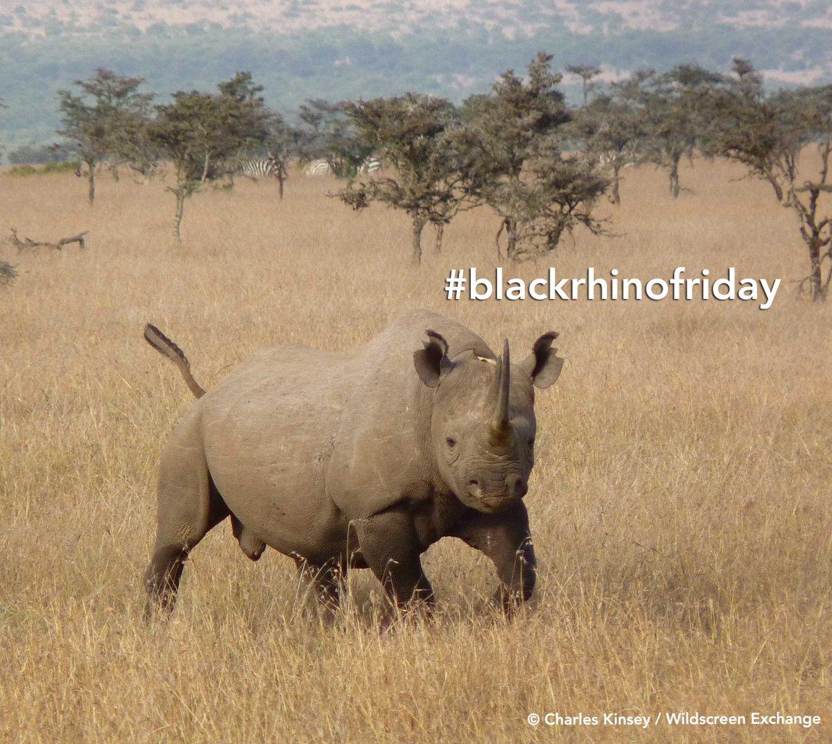 #ff #blackrhinofriday @savetherhino @RhinosIRF @I_love_rhinos @HelpingRhinos  @TeamRhinoUK @AntiPoach https://t.co/oT76abQUSZ