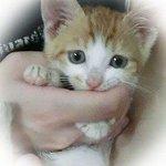 500RT:【見つかりますように】豊島区、239匹の猫の里親を募集中 https://t.co/Ygm02tq918 NPO法人「東京キャットガーディアン」の公式サイトで譲渡条件などを確認、申し込み後に面談を行い引き取り手を決め… https://t.co/BfKvW8yTNS