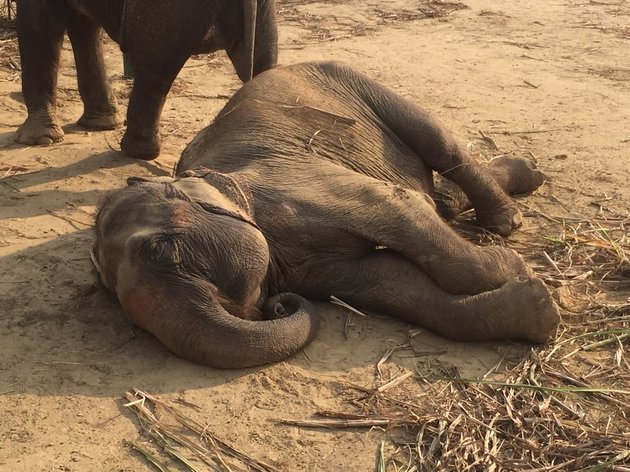 After 50 years in chains, @wildlifesos rescues two elephants. Their response to freedom: https://t.co/CzRAviWQkb https://t.co/buF7lmcjMe