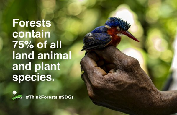 Forests do more than just fight climate change... #StandWithForests #COP21 #GLFCOP21 https://t.co/fvqgKiALRq
