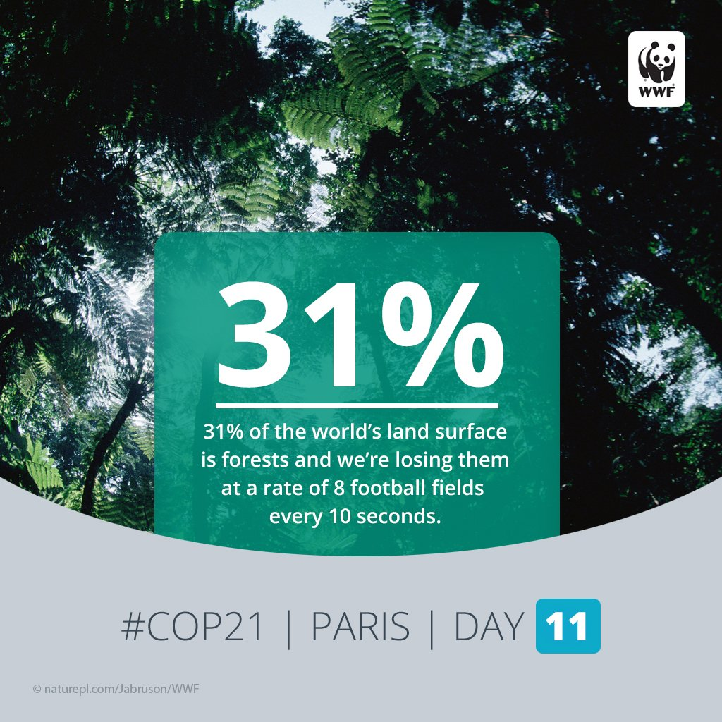 RT @World_Wildlife: Protecting our forests is key to curbing #climatechange. Colombia's new approach: https://t.co/2o2VWh9FZe #COP21 https:…