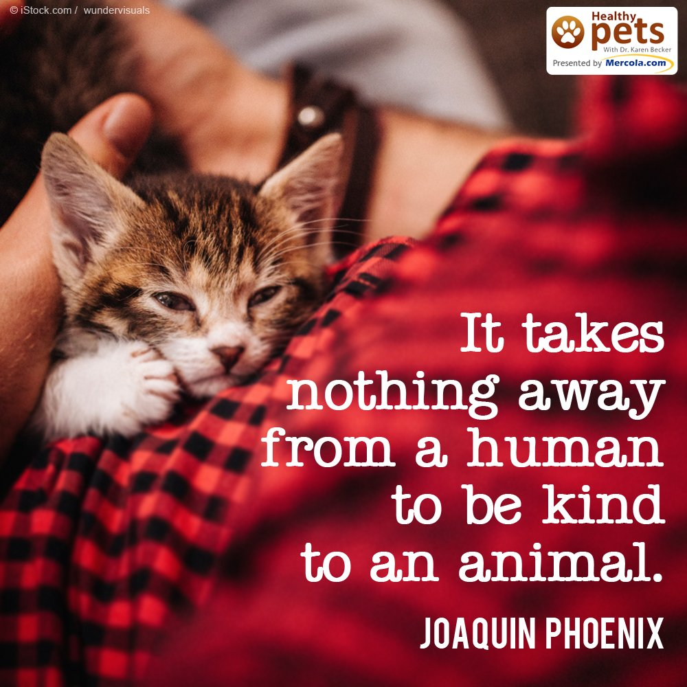 """""""It takes nothing away from a human to be kind to an animal."""" - Joaquin Phoenix https://t.co/So7BBuPFQG"""