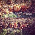 Rotting pumpkins https://t.co/qIRfdy4AEg