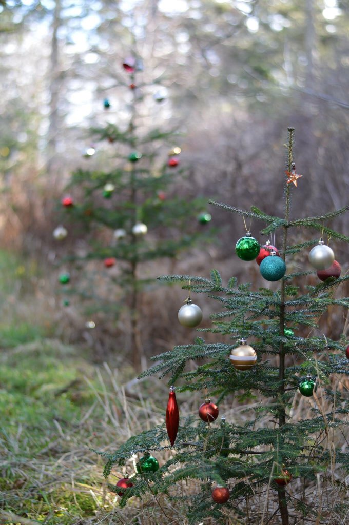Stumbled across this beautiful trail in Nova Scotia that's been entirely decorated for the holidays. https://t.co/MdeJ9eWzY9