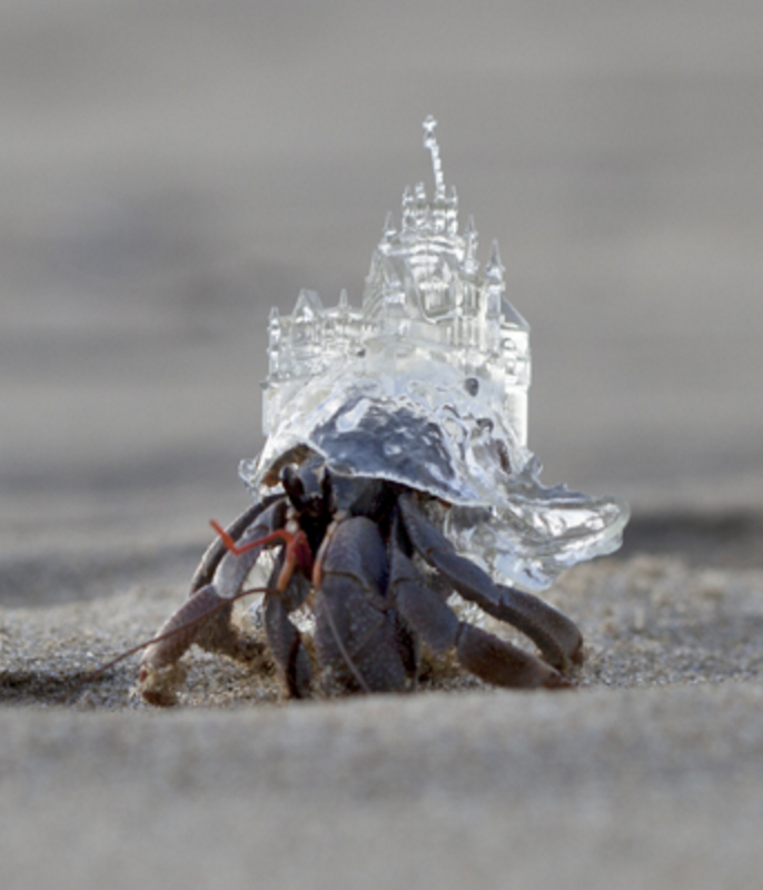 Artist Aki Inomata reflects on #migration, makes hermit crab homes into tiny works of art https://t.co/EpjiyYHnbV https://t.co/v2kn2SN5qb