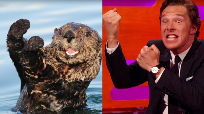 Benedict Cumberbatch has discovered his hidden talent - impersonating otters