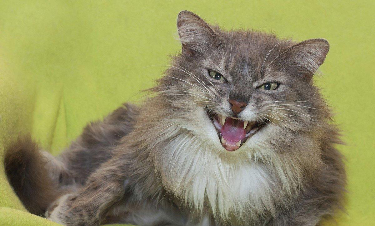 6 comportamientos humanos que los gatos detestan
