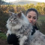 Maine Coon Cats That Will Make Your Cat Look Tiny https://t.co/aSEHqFwmP4 https://t.co/LLvDGRi6fx