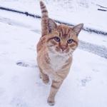 Минск в Instagram: топ-10 снимков за неделю.  https://t.co/J88zttLKea  Ну очень красивая подборка! 😍 https://t.co/BzO5jMuGEI