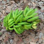 @benkokus plantain from my farm. #CitiCBS https://t.co/JFkbvUTTNx