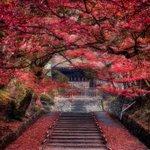 世界よ、これが京都の秋だ。あるいはそうだ京都行こう。  1. 2015年朝、100mm 2. 2014年夜、22mm 3. 2013年夜、14mm 4. 2012年朝、16mm  #紅葉 #京都 #Nikon #東京カメラ部 https://t.co/jVFZ278uOJ