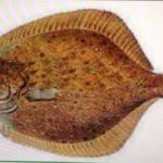 Pleuronectiformes me dejaste curiosa ???? #PSU2015 https://t.co/sJld3vkYaX