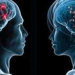 Científicos niegan que pueda hablarse de un cerebro masculino y otro femenino https://t.co/qg0193vLZL https://t.co/TBSsdhCdcB