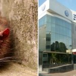 Por falta de higiene en morgue de clínica de Cartagena, rata mordió el rostro de un niño https://t.co/8wt1Q9fmd2 https://t.co/QcYzT4wXrL
