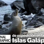 . @NationalGeoESP hará un documental de las Islas #Galápagos » https://t.co/b7odbNjlA0 https://t.co/Twjj7Q7qDp