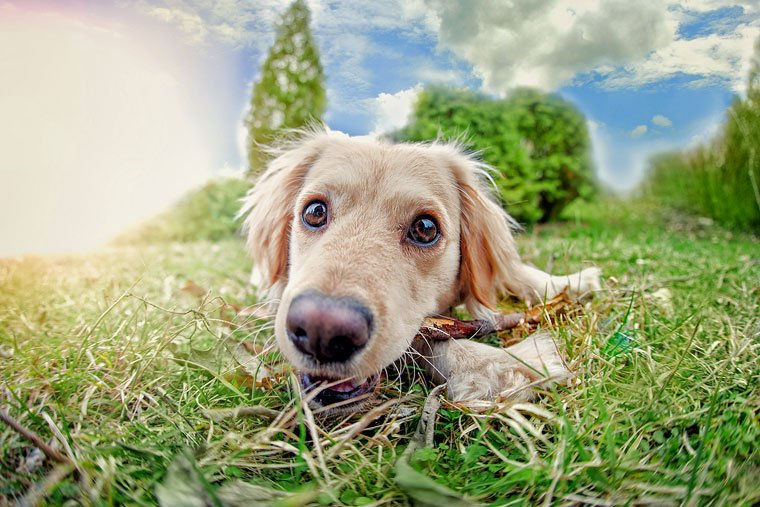 Do tummy issues have your dog eating grass? Try #BayerExpertCare Probiotic Soft Chews  #ad https://t.co/5NQT9eMCWF https://t.co/Vn6oWlm4vS