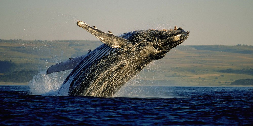 Cape Town offers these unique whale watching sights GoSeeCapeTown 🐳(via @mailonline)
