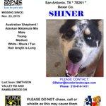 Shiner was last seen around Smithson Valley Rd & Ramblewood Dr #sanantonio. #lostdog https://t.co/yy2vrPGXrN
