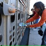 Woman who watered thirsty #pigs faces threat of 10 years in jail ???? ???? https://t.co/5wZy4hAg1y #AnimalRights https://t.co/sE1voWXGDZ