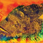 Stonefish discovery could reduce cancer patients transplant rejection rate https://t.co/haHvPGzH5Y Pic @arc_gov_au https://t.co/kMsoCEYo2O