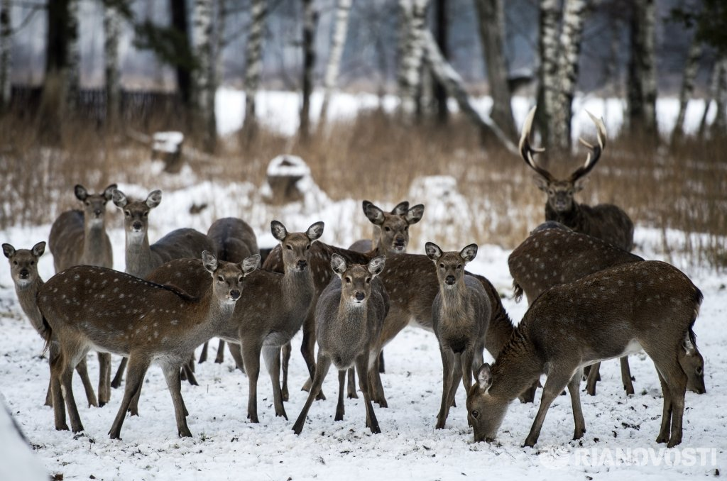 an analysis of the field trip to elk island park
