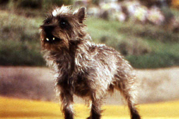 Has #toto been cut from #TheWiz due to budget cuts?!!! #freetoto #TheWizLive https://t.co/KKcpMKiUtt